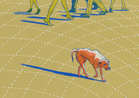 Dog, Shadow and People's Feet, Hye Jin Chung