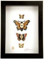 Cabinet of Curiosities Specimen no. 15 - The Monarch Moth Eye Flies , Mab Graves