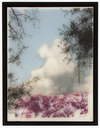 Purple Blue Mountain, Brooks Salzwedel