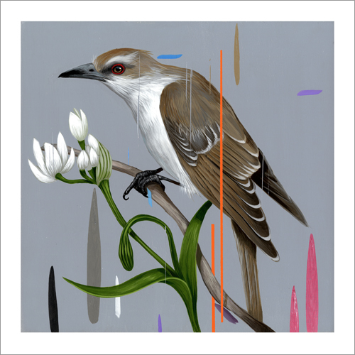 Black Billed Cuckoo, frank gonzales