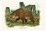 Owl Bear (print), Tony DiTerlizzi