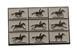 Eadweard Muybridge (horse animation enamel pin)